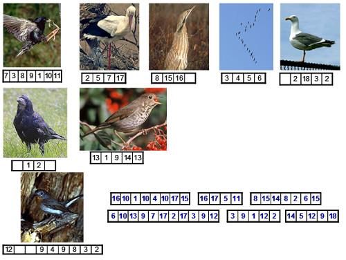Урок по теме: «Многообразие птиц. Систематические и экологические группы птиц»