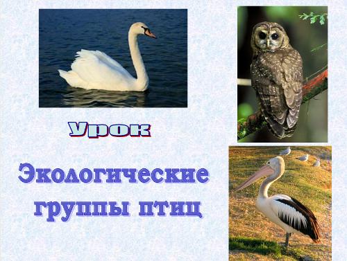 Презентация «Многообразие птиц. Систематические и экологические группы птиц»