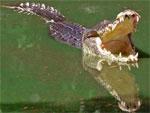 10 удивительных фактов о животных | Фото с сайта Pandiyan