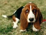 Полезны ли собаки для здоровья? | Фото с сайта wallplanet.ru
