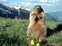 Фото с сайта www.zookeeper-film.ru