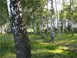 Использование краеведческого материала на занятиях казахского языка