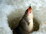Ловись, рыбка | Фото с сайта poimaika.ru