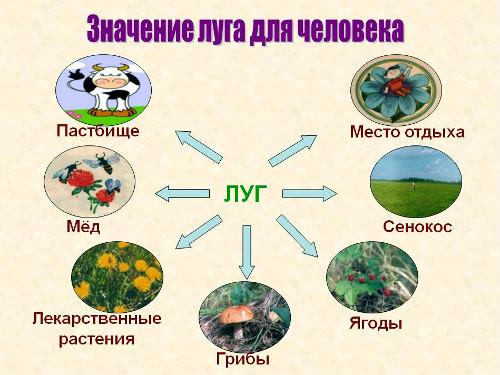 Урок на тему Луга Растения и животные луга Международный  Как вы думаете какое значение в жизни человека играет луг