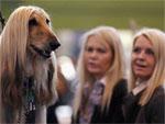 Доказано: собаки похожи на хозяев