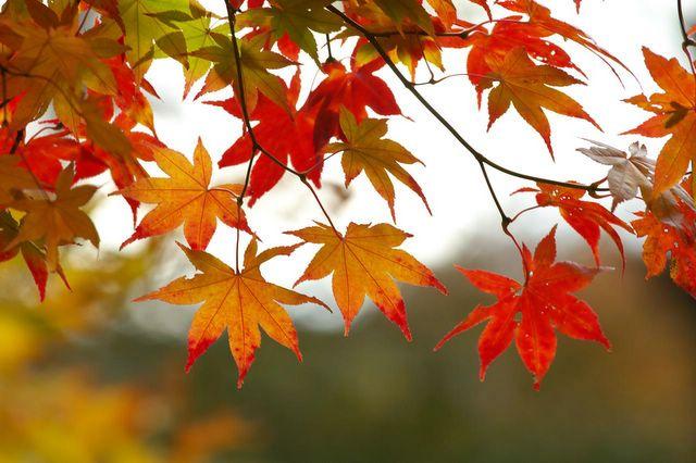 Тема: Осенняя палитра | Фото с сайта sunhome.ru