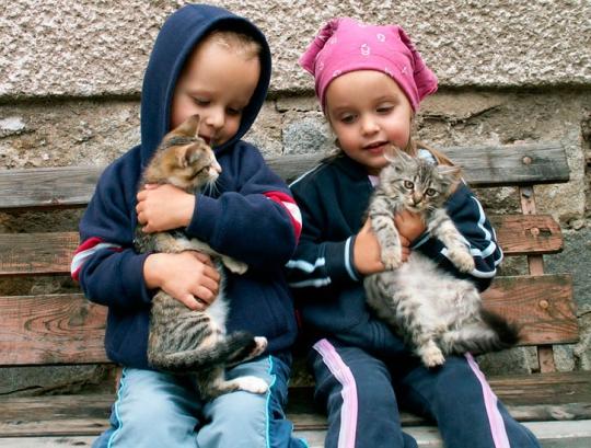 Группе по теме домашние животные