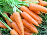 Специальная морковь спасет казахстанцев от туберкулеза | Фото с сайта namonitore.ru