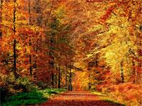 Названы причины, почему осень полезна для здоровья | Фото с сайта liveinternet.ru