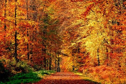 Осень - время возбуждения деловой активности