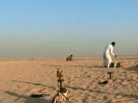 Тренировки соколов проходят в степи Казахстана и Пакистана