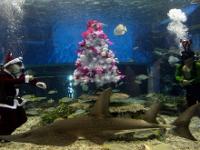 В Оренбурге дайверы отрепетировали встречу Нового года под водой   Фото с сайта news.tut.by