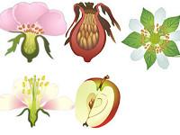 Обобщение по теме «Покрытосеменные растения»