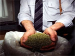 В Казахстане курительные травяные смеси приравнены к наркотикам