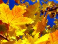 Акция «Осенние каникулы»