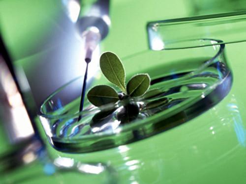 Урок-зачет на тему «Развитие органического мира»