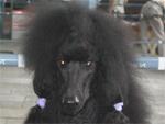Целебные свойства шерсти собак