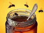 Что делать, если Вас ужалила пчела