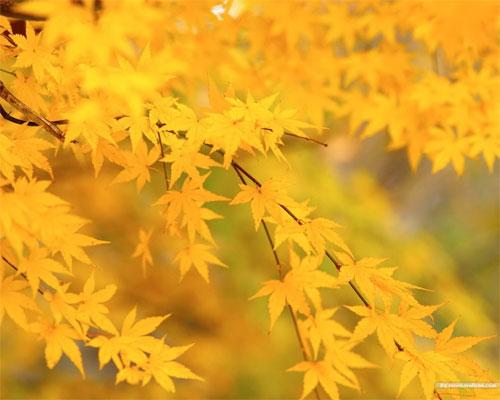 Урок по самопознанию на тему: «Осень золотая» | Фото с сайта nanya.ru