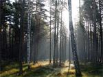 Интерактивное мероприятие конкурс-путешествие на тему: «Тайны леса нашей Родины»   Фото с сайта www.photosight.ru