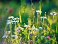 Положение о проведении конкурса «Июнь — месяц белых ночей, цветущих трав, поющих птиц»