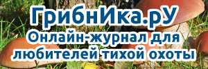 ГрибнИка.рУ | Онлайн-журнал для любителей тихой охоты