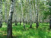 Тема: «Приглашение от солнца в весенний лес»