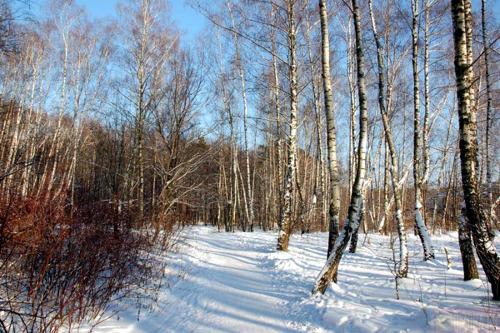 План организованной учебной деятельности: Зас — Зима