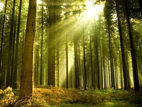 Беседа: «Лес наше богатство»