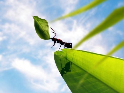 Тема: «Наш дом природа»