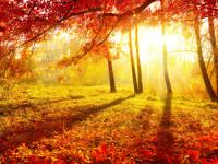 Сценарий праздника «Золотая Осень»